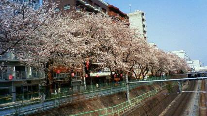 巣鴨の桜も_f0140343_1437691.jpg