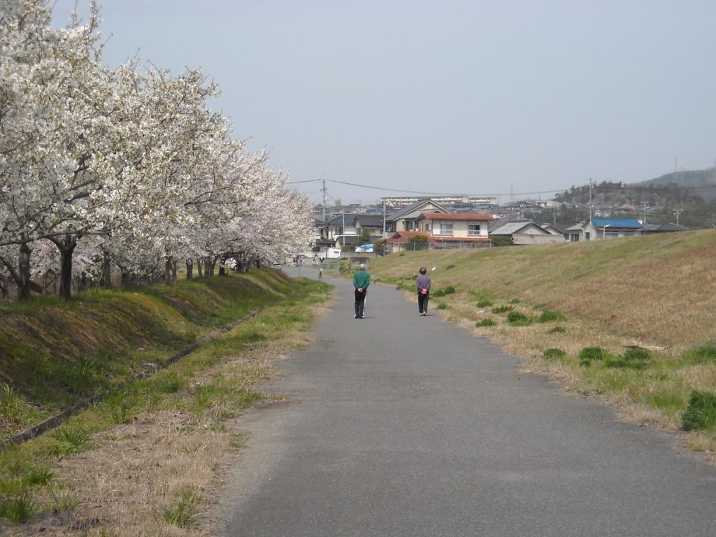 桜道を散歩_f0184247_16261811.jpg