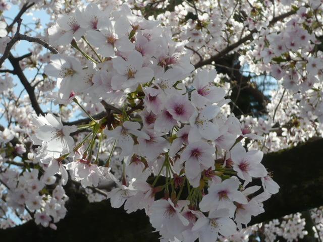 お花見!!_e0175651_14274222.jpg