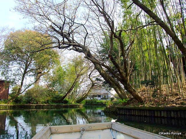 柳川 川下り_a0092659_091527.jpg