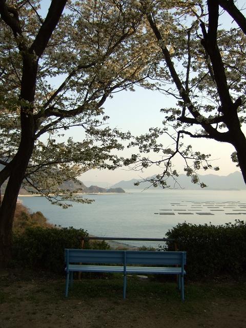 坂町横浜公園の桜 その1_b0095061_89407.jpg