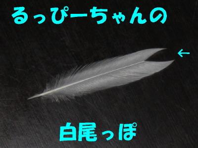 b0158061_20521757.jpg