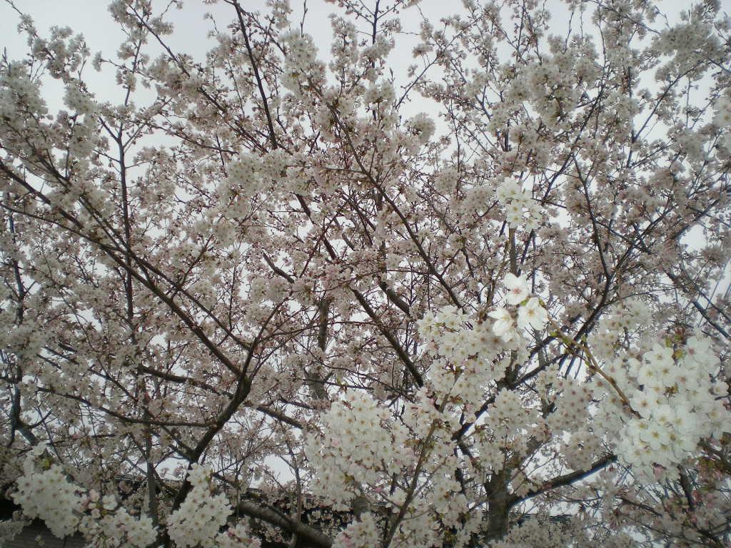 2010年4月6日(火)春かすみ~!_f0060461_1073985.jpg