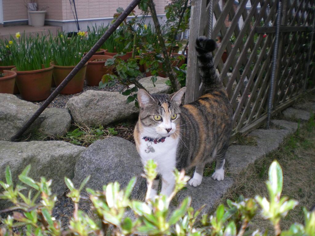 2010年4月6日(火)春かすみ~!_f0060461_9474653.jpg