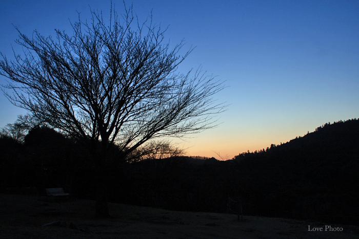 若草山の夜明け_a0116472_9184269.jpg