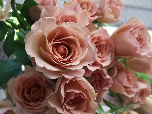 オークリーフ(そろそろ薔薇の季節に・・)_f0049672_11584388.jpg