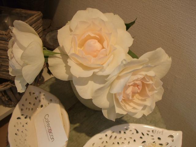 オークリーフ(そろそろ薔薇の季節に・・)_f0049672_11595097.jpg