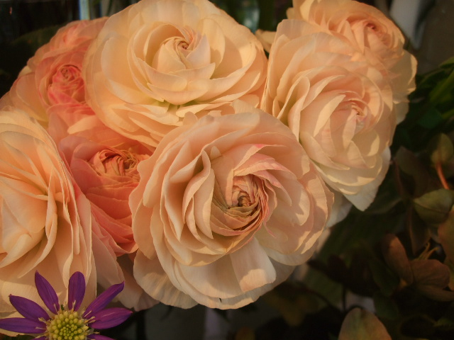 オークリーフ(そろそろ薔薇の季節に・・)_f0049672_1223672.jpg