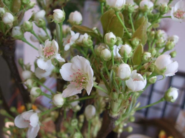 オークリーフ(そろそろ薔薇の季節に・・)_f0049672_1231088.jpg
