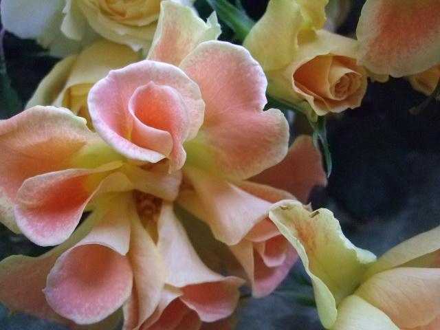 オークリーフ(薔薇・イエローエタニティーを入れた花束)_f0049672_14532684.jpg