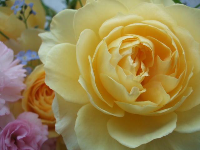 オークリーフ(薔薇・イエローエタニティーを入れた花束)_f0049672_14552614.jpg
