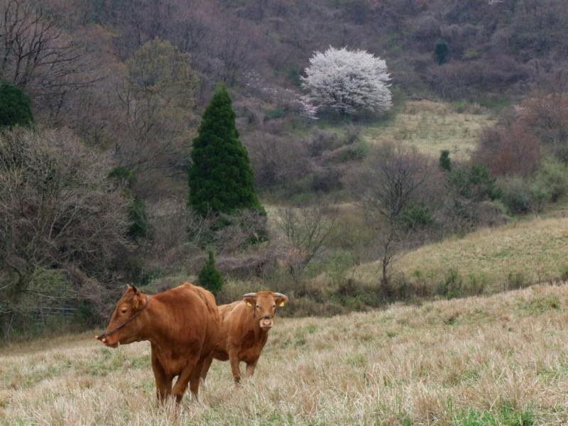 牧野の春_b0188175_2053912.jpg