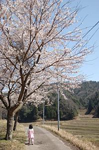 村の桜_f0169675_22595378.jpg