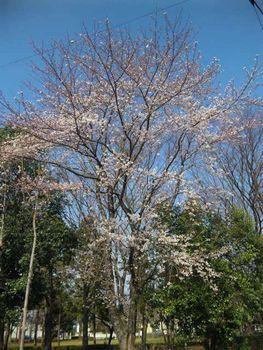 桜袋_e0143294_17303688.jpg