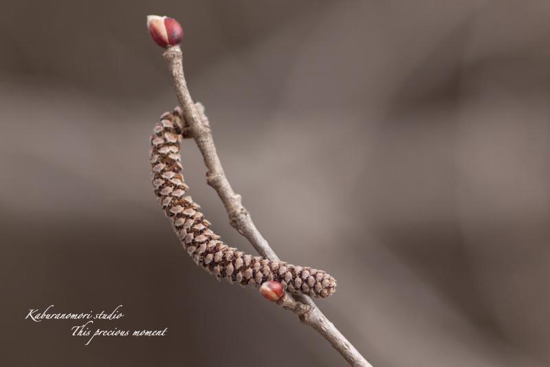 野っぱらにも春が来た_c0137403_171847.jpg