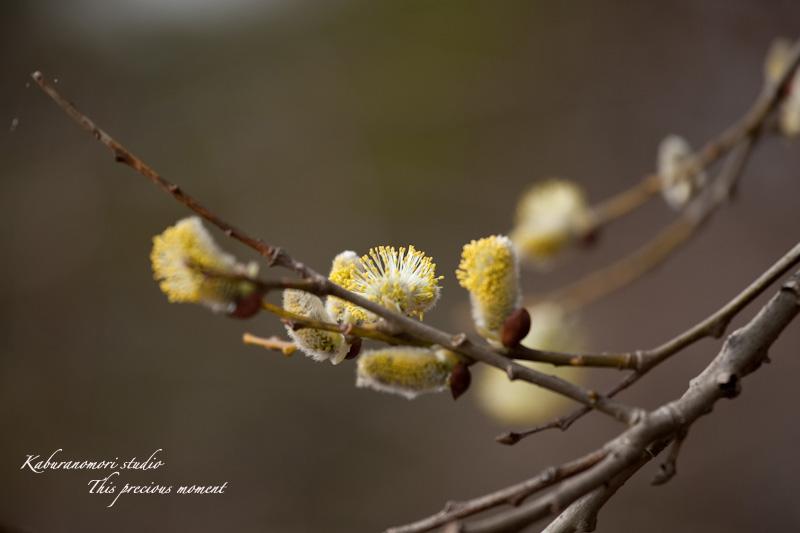 野っぱらにも春が来た_c0137403_172605.jpg