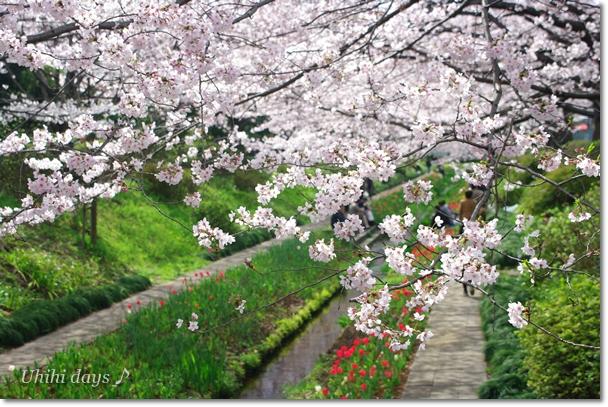 桜とチューリップの共演_f0179404_20573357.jpg