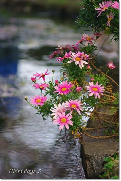 桜とチューリップの共演_f0179404_21111493.jpg
