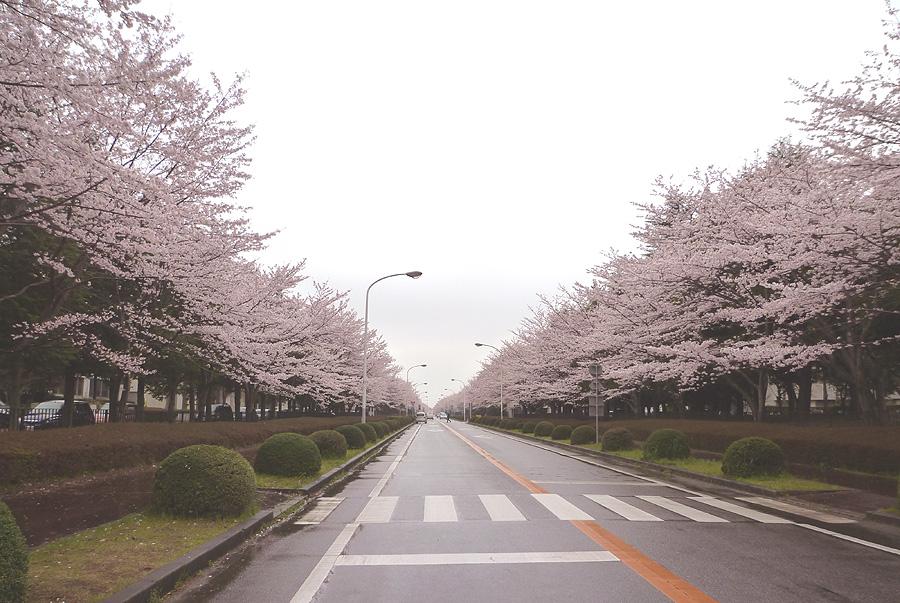 満開の桜_d0151813_19512987.jpg