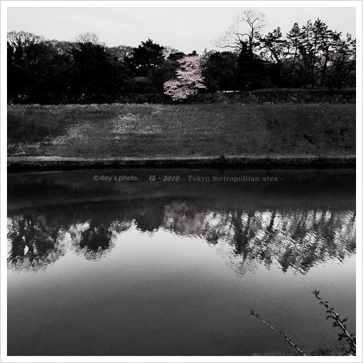 お濠の桜_e0117517_15113660.jpg