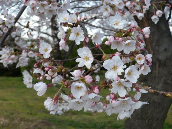春ですね_f0068517_102748.jpg