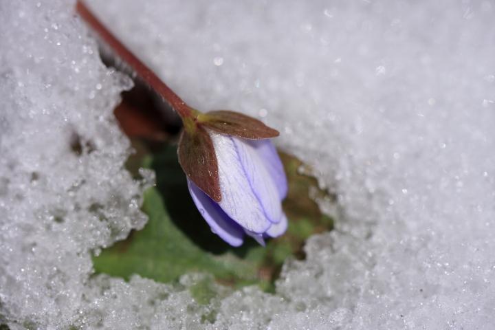 春雪_e0169421_22134194.jpg