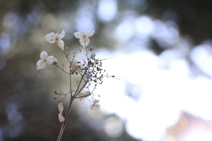 春雪_e0169421_22154397.jpg