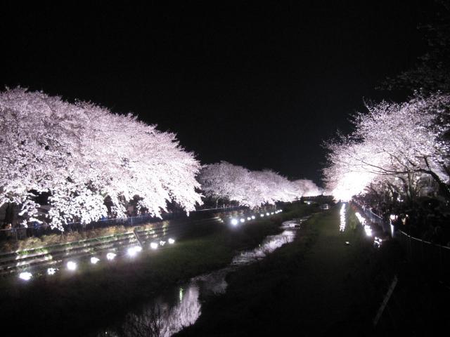 桜 さくら sakura_f0180433_21193355.jpg