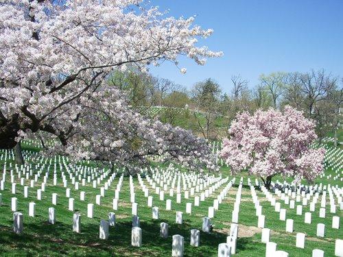 DCでお花見 part3 アーリントン墓地_c0064534_2342267.jpg