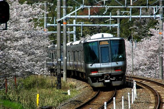 春爛漫_b0093754_017236.jpg