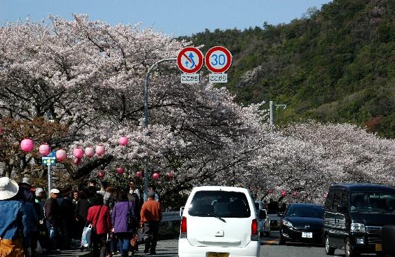 春爛漫_b0093754_2344428.jpg