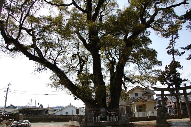 『2010年4月度「大人の林間・臨海学校」第2日』 _c0108460_0304886.jpg