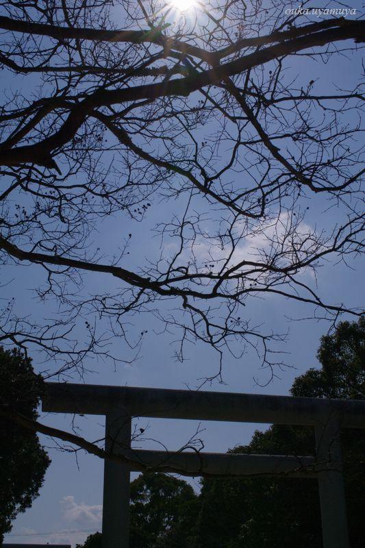 淡路島・伊弉諾神宮_a0157263_23481267.jpg