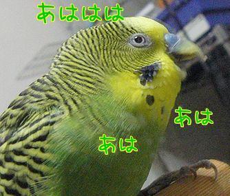 f0196665_0311997.jpg