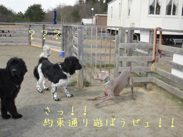 春の予感_f0065568_2110621.jpg