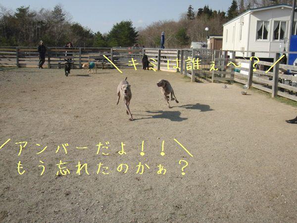 春の予感_f0065568_2135931.jpg