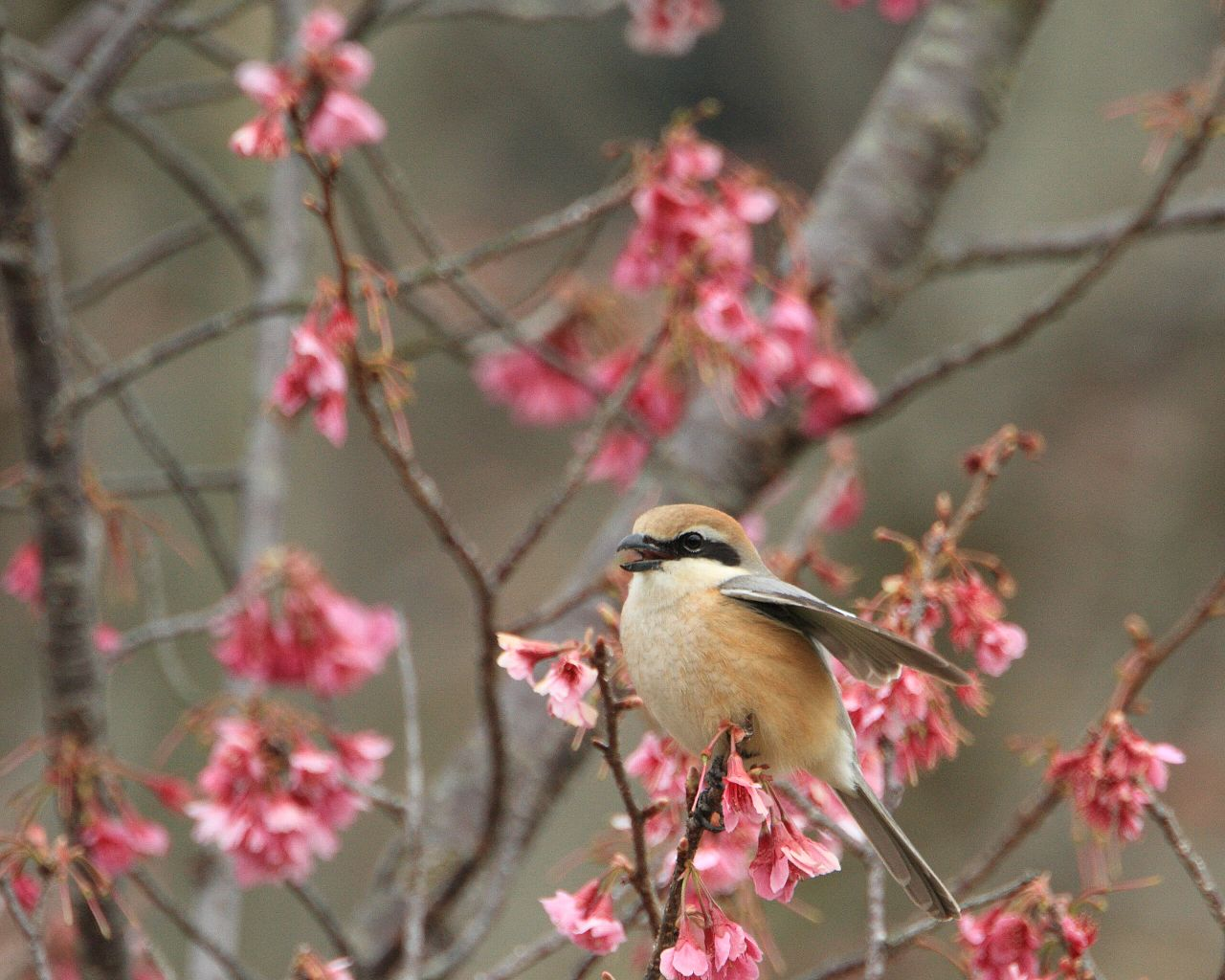 花と野鳥シリーズ続きます。_f0105570_21223523.jpg