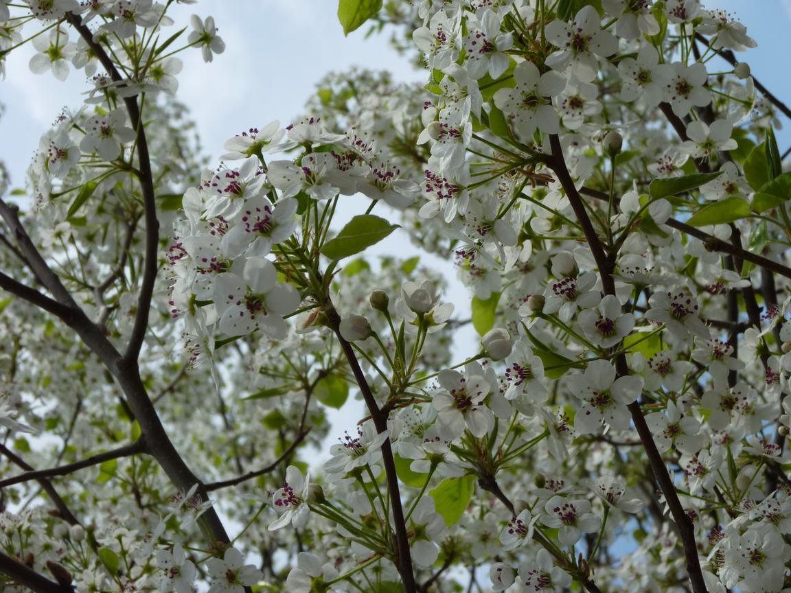 春が来ています、マンハッタンに・・・・、_d0100880_8364138.jpg