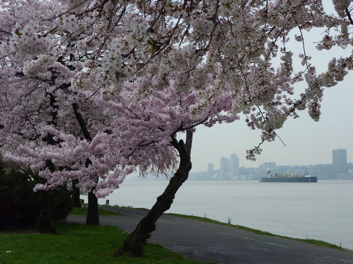 春が来ています、マンハッタンに・・・・、_d0100880_838364.jpg