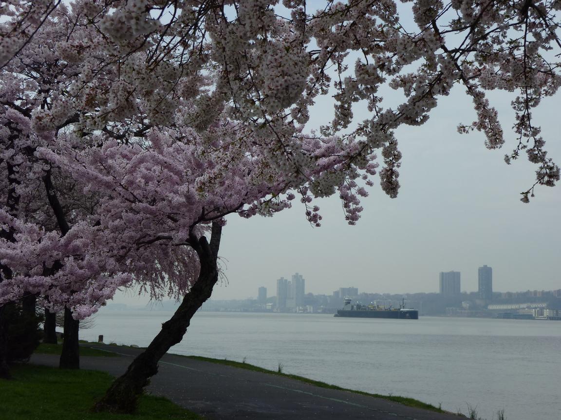 春が来ています、マンハッタンに・・・・、_d0100880_8393682.jpg