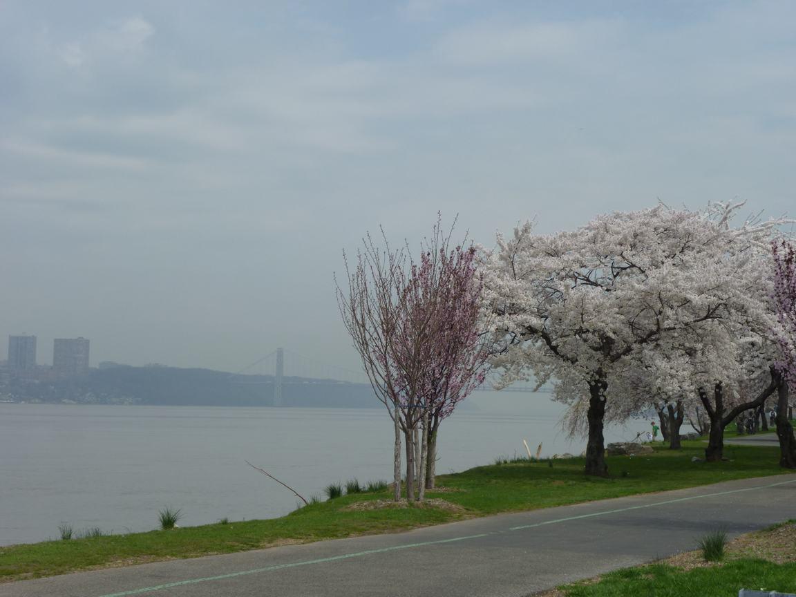 春が来ています、マンハッタンに・・・・、_d0100880_8453734.jpg