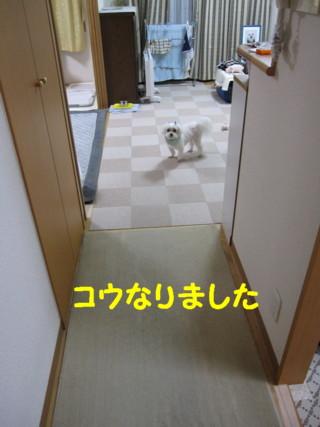 f0145192_123923.jpg