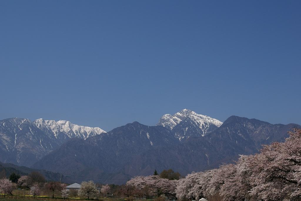 昨年の桜_f0138096_932082.jpg