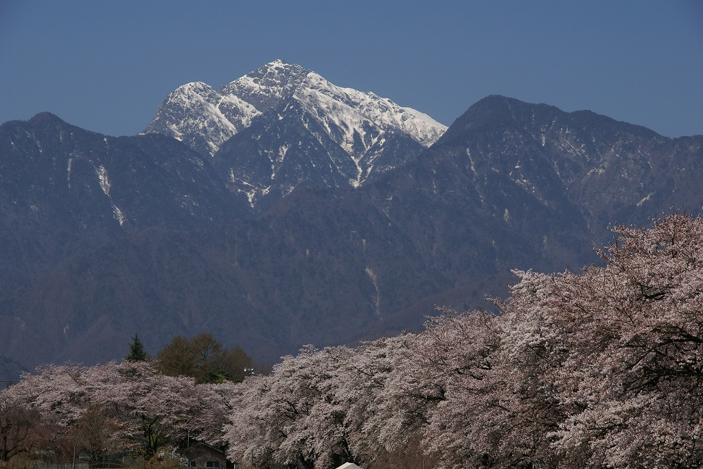 昨年の桜_f0138096_9321443.jpg
