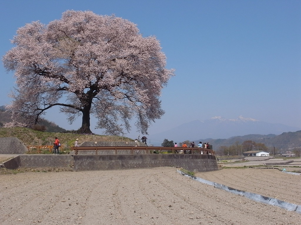 昨年の桜_f0138096_932388.jpg