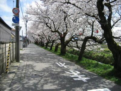 桜並木2010☆桜色舞うころ☆_c0113001_20252084.jpg