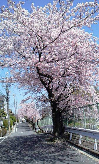 お花見日和_a0115906_1257735.jpg