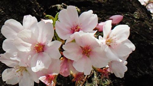 お花見日和_a0115906_12584886.jpg