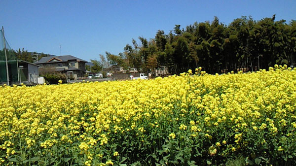 お花見日和_a0115906_1353951.jpg