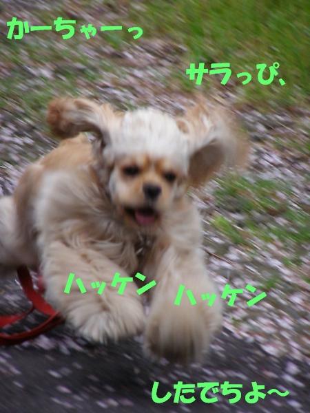 b0067012_025917.jpg